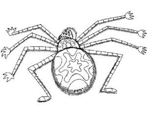 Паучки и пауки картинки раскраски (13)