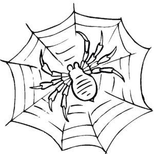 Паучки и пауки картинки раскраски (14)