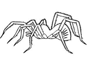 Паучки и пауки картинки раскраски (15)