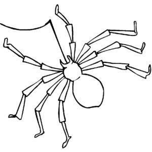 Паучки и пауки картинки раскраски (16)