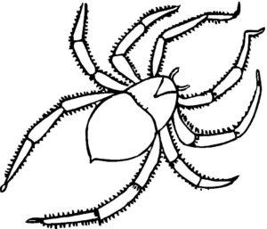 Паучки и пауки картинки раскраски (17)