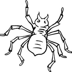 Паучки и пауки картинки раскраски (18)