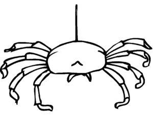 Паучки и пауки картинки раскраски (19)
