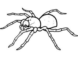 Паучки и пауки картинки раскраски (2)