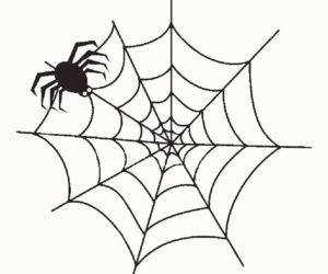Паучки и пауки картинки раскраски (21)