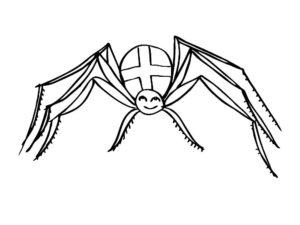 Паучки и пауки картинки раскраски (22)