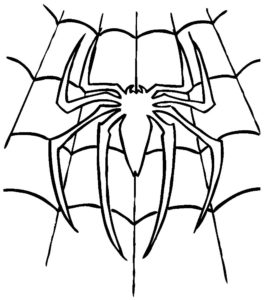 Паучки и пауки картинки раскраски (25)