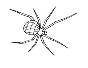 Паучки и пауки картинки раскраски (29)
