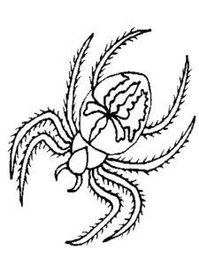 Паучки и пауки картинки раскраски (3)