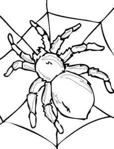 Паучки и пауки картинки раскраски (31)
