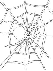 Паучки и пауки картинки раскраски (34)