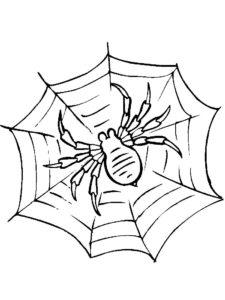 Паучки и пауки картинки раскраски (4)