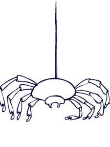 Паучки и пауки картинки раскраски (6)