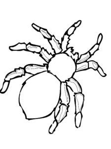 Паучки и пауки картинки раскраски (9)
