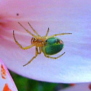 Паучки и пауки раскраски
