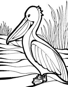 Пеликан картинки раскраски (1)