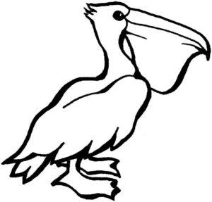 Пеликан картинки раскраски (12)