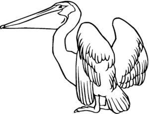 Пеликан картинки раскраски (14)