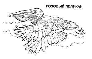 Пеликан картинки раскраски (16)