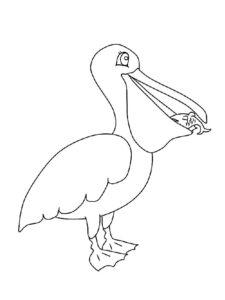 Пеликан картинки раскраски (23)