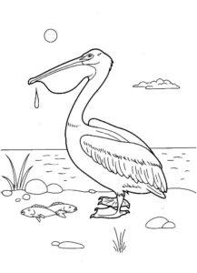 Пеликан картинки раскраски (29)