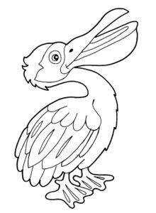 Пеликан картинки раскраски (31)