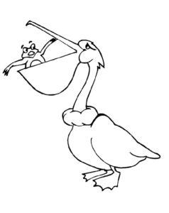 Пеликан картинки раскраски (34)