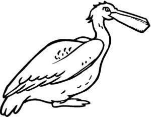 Пеликан картинки раскраски (5)