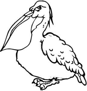 Пеликан картинки раскраски (6)