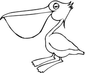 Пеликан картинки раскраски (7)
