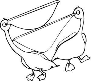Пеликан картинки раскраски (9)