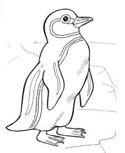 -картинки-раскраски-70-246x300 Пингвин