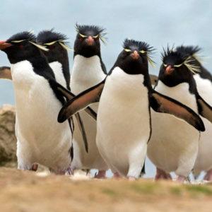 Пингвин раскраски