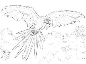 Попугай ара картинки раскраски (10)