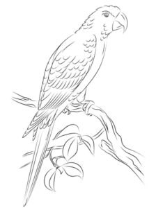 Попугай ара картинки раскраски (11)