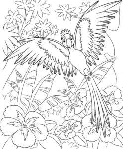 Попугай ара картинки раскраски (14)