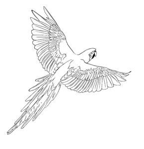 Попугай ара картинки раскраски (15)