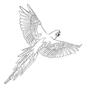 -ара-картинки-раскраски-15-290x300 Попугай ара