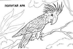 Попугай ара картинки раскраски (17)