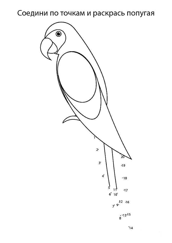 попугай ара картинки раскраски 3 рисовака