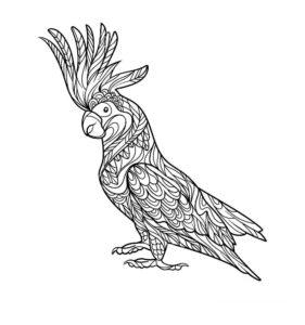 Попугай ара картинки раскраски (4)