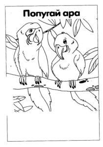 Попугай ара картинки раскраски (5)
