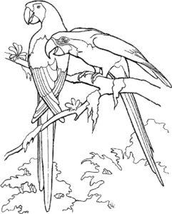 Попугай ара картинки раскраски (6)