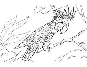 Попугай ара картинки раскраски (8)