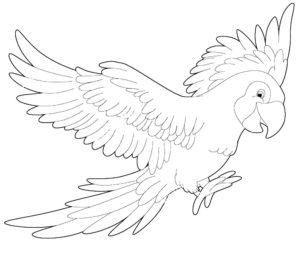 Попугай ара картинки раскраски (9)