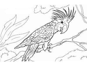 Попугай раскраска картинки раскраски (1)