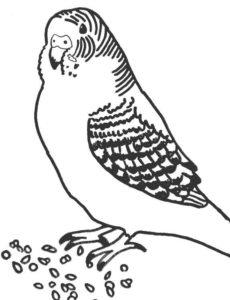 Попугай раскраска картинки раскраски (10)