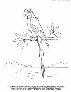 Попугай раскраска картинки раскраски (11)