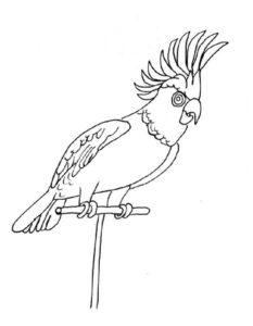Попугай раскраска картинки раскраски (12)