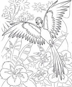 -раскраска-картинки-раскраски-13-248x300 Попугай ара